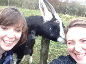 Patch the goat nuzzling/nibbling my ear. They'll eat anything!